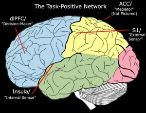 """Task-Positive Network"" derivative of work by Mysid"