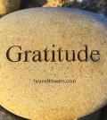 Guided Meditation for Gratitude